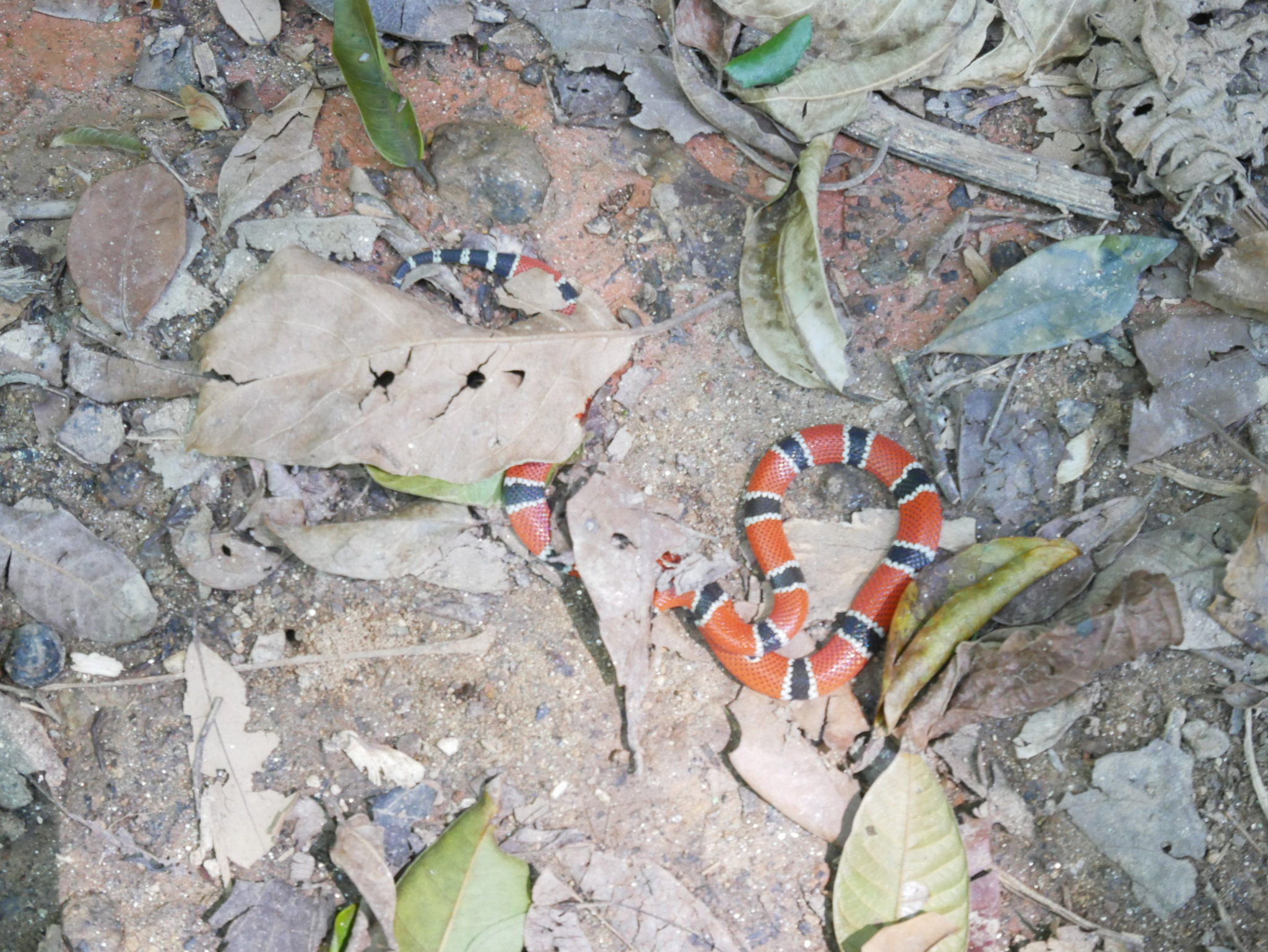 Poisonous snake we saw on our hike